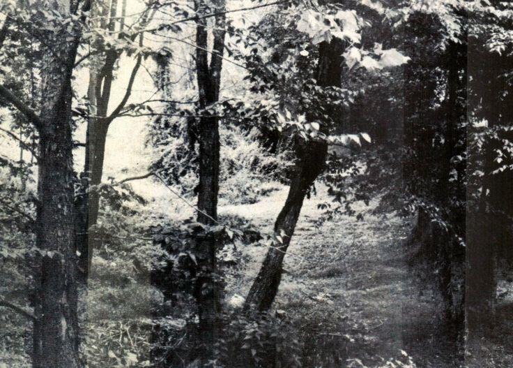 Randall Mccoy Family Tree
