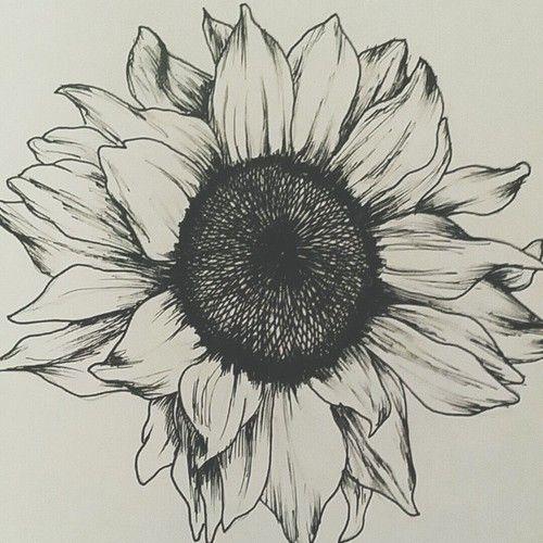 The 25+ best Sunflower drawing ideas on Pinterest