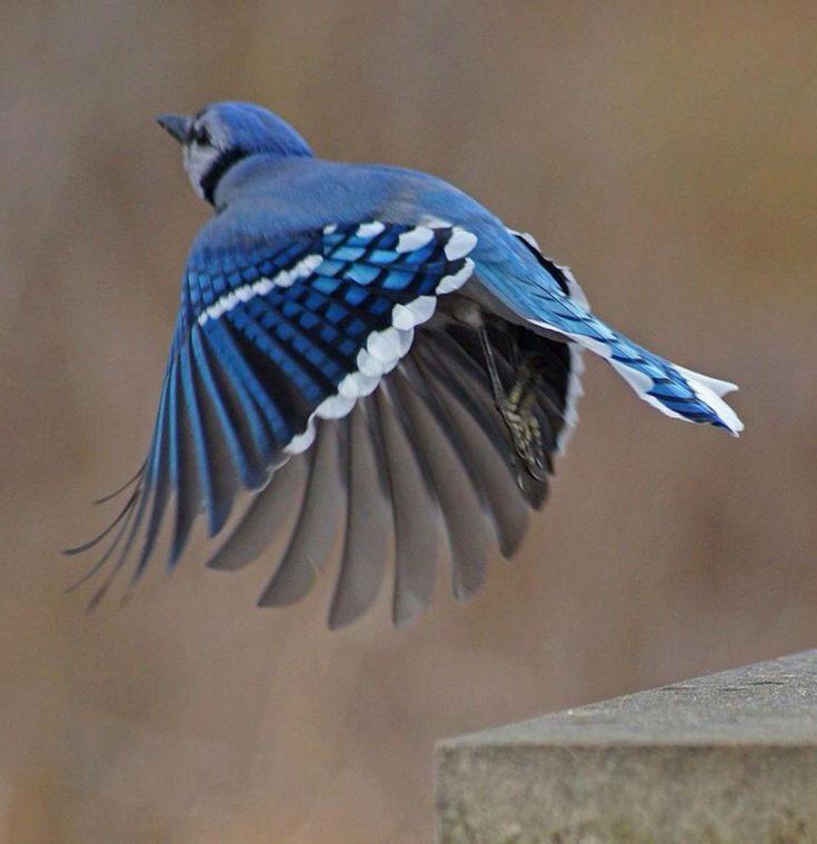 And White Flight Black Winter Pennsylvania Bird