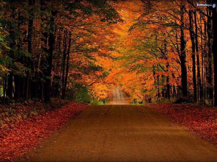 Free Fall Screensavers And Wallpaper Free Orange Autumn