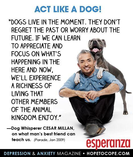 Dog Mans Best Quote Friend