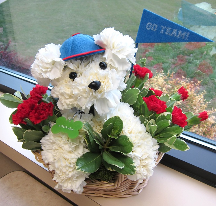 Carnation Flower Arrangements Puppy