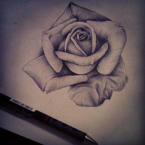 Group of: roses pencil drawing tumblr | tattoos ...