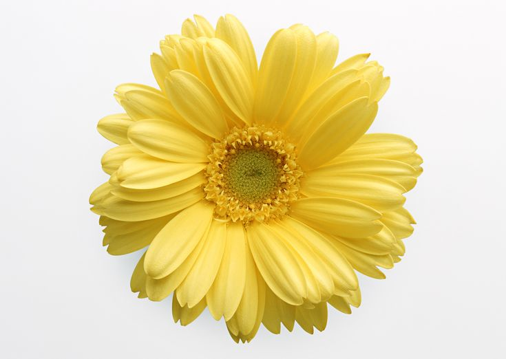 Birthday Vicki Happy Images Flower