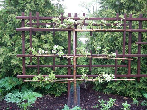 An Idea For A Free Standing Espalier Frame Fence