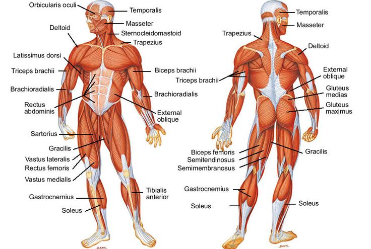 Anatomical Names Of Bones