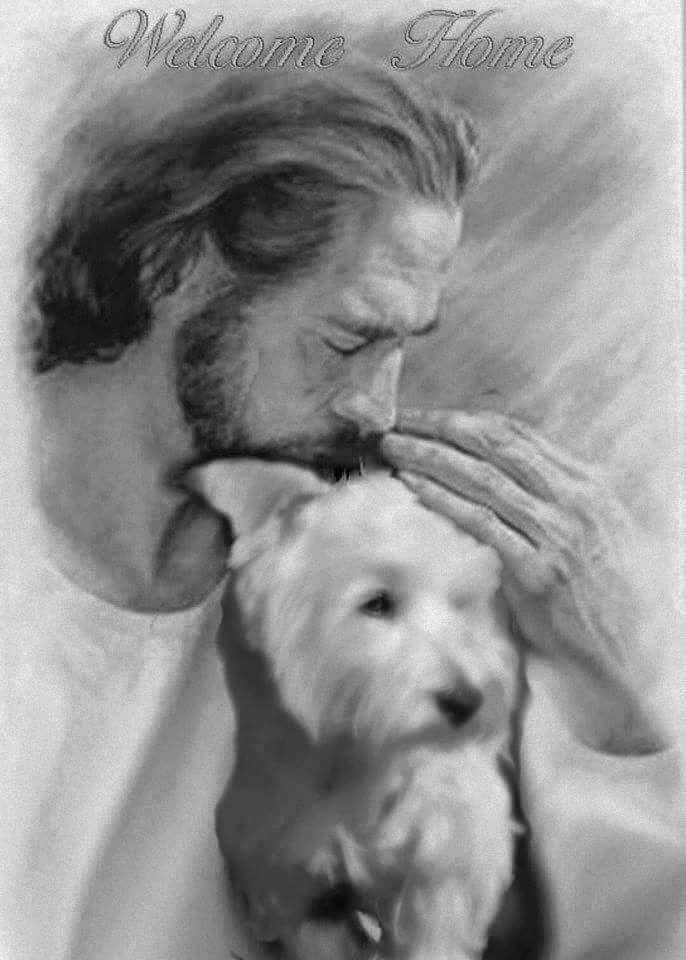 Hevan Art Go Dogs Key West Galleries
