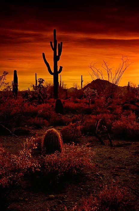 Amazing Landscape Desert Sunset
