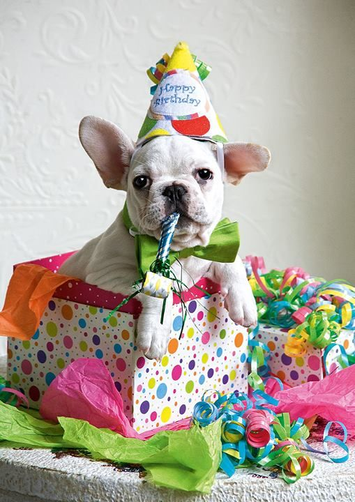 Wishes Shepherd German Puppy Birthday