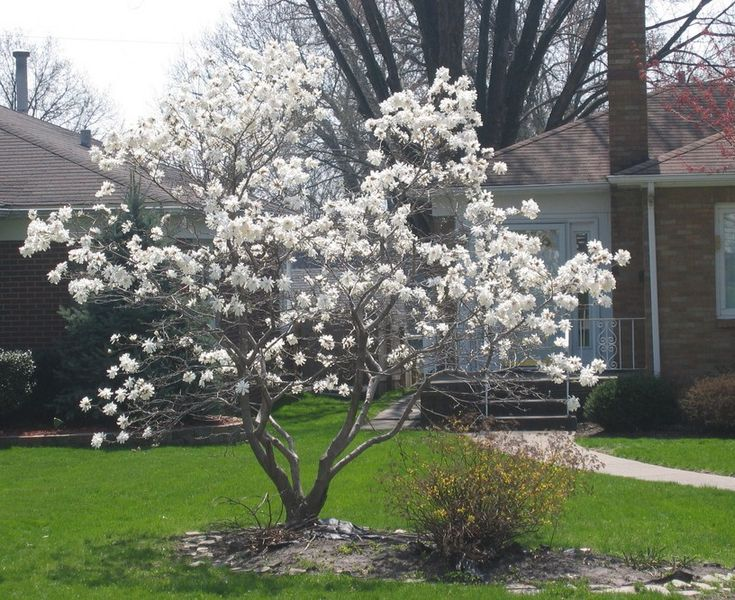 Best Small Trees Front Yard