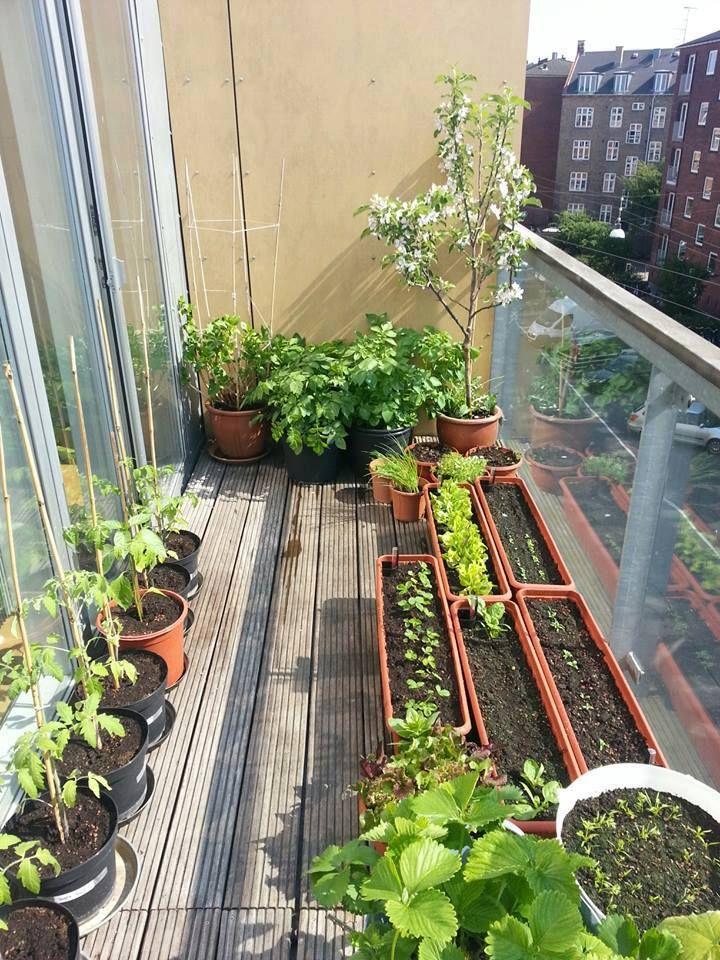 Vegtible Garden Apartment Balcony Ideas