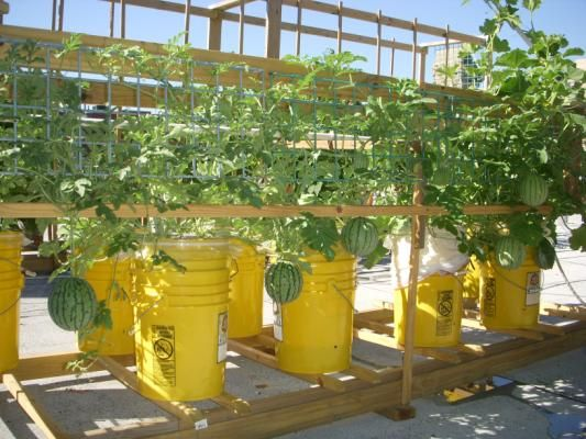 It Safe Grow Vegetables Plastic Pots