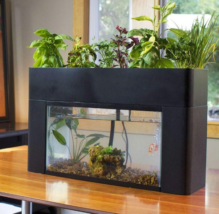 Outdoor Fish Tank Ideas