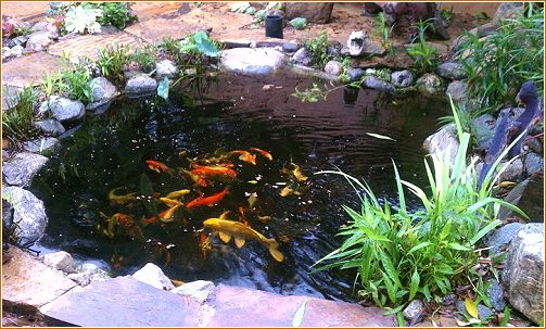 Tiny Creatures Fish Pond