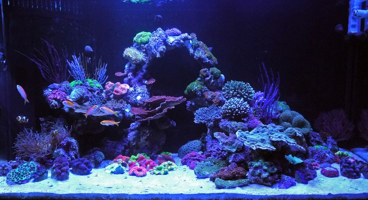 Best Led Lighting Coral Reef Tanks