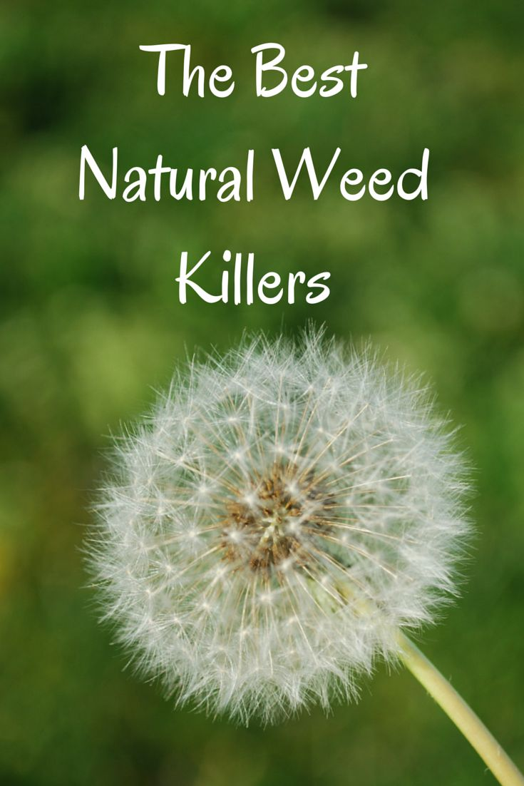 Salt Killer Recipe Vinegar Weed