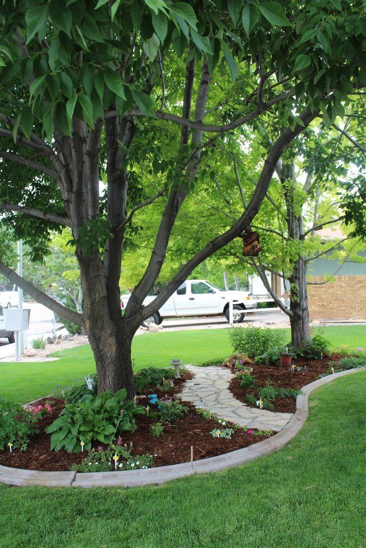 Trees House Front Landscaping