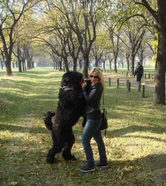 Growth Black Russian Terrier Chart