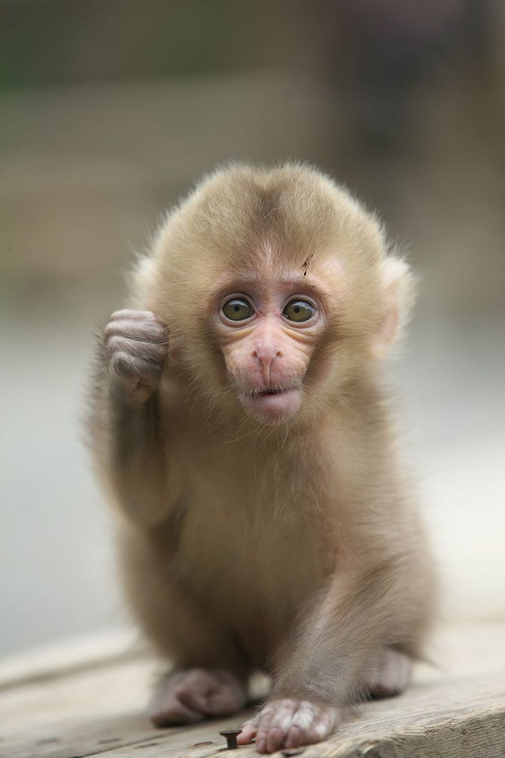 Sweet And Cute Monkey Pics