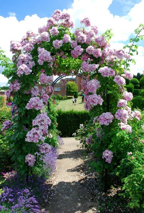 Best Fence Climbing Rose