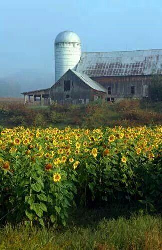 Sunflower Barn Quilt Patterns