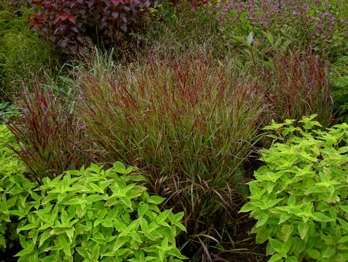 Zone 7 Plants And Shrubs