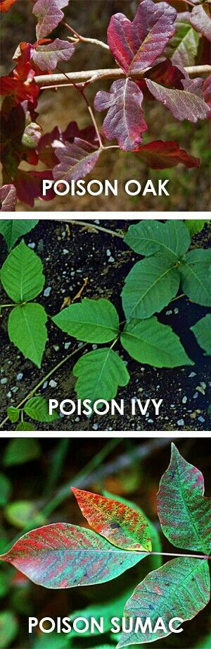 Does Sun Need English Ivy