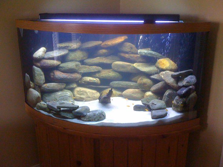 Bow Front Corner Aquarium