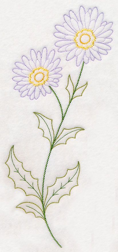 Drawing Flower Glory Morning Vines