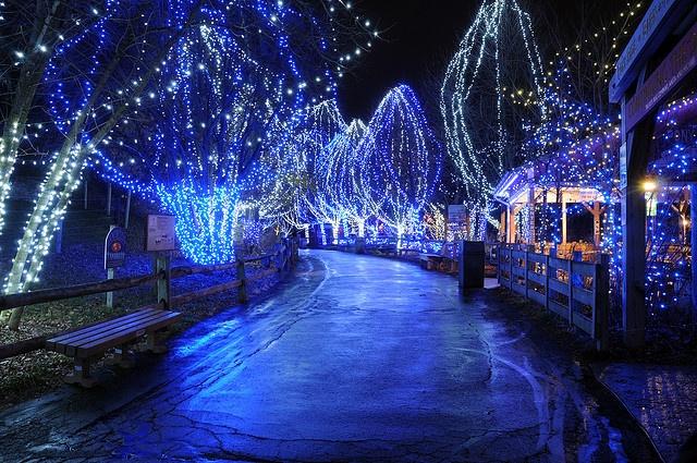 Cleveland Lights Zoo