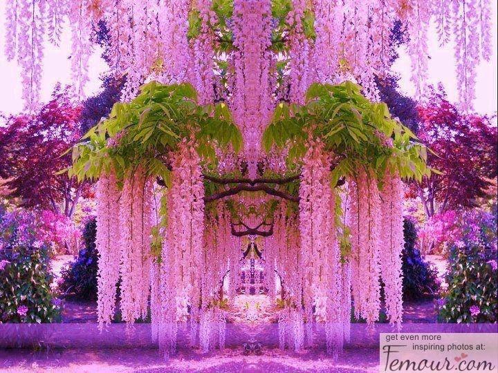 Wisteria Purple Vine Flower