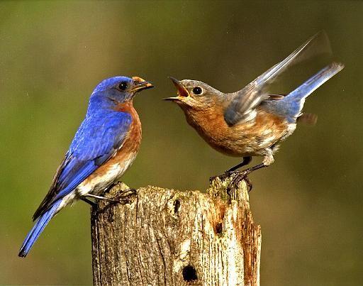 Animal Courtship Behavior Funny
