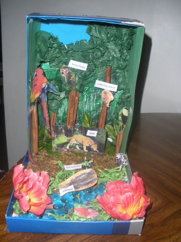 Shoebox Habitat Jaguar