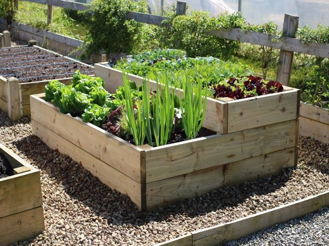 Beds Raised Vegetables Best