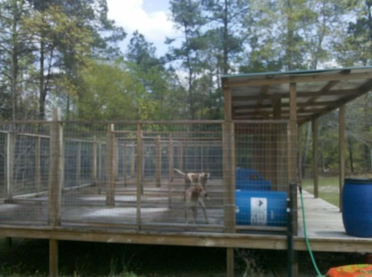 Above Ground Kennel Hunting Dog