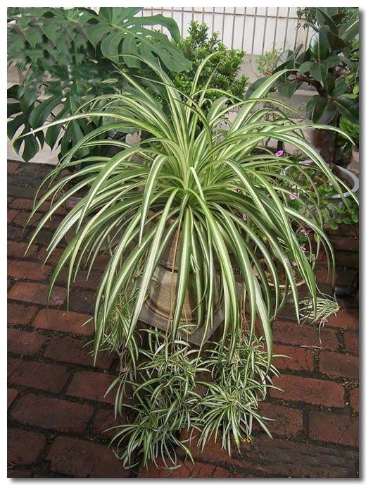Green Leafy Hanging Plants