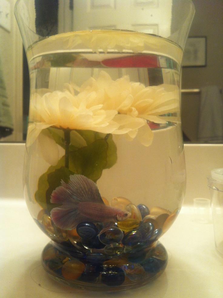 Betta Fish Container Ideas