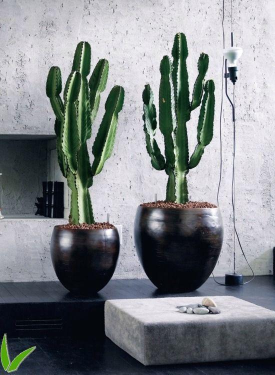 Indoor Hanging House Plants