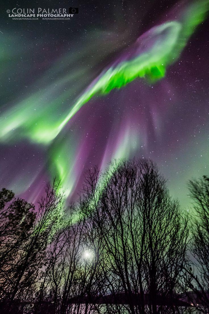 Bc Northern Lights Catalog