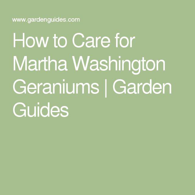 25+ best ideas about Geranium Care on Pinterest | Geranium ...