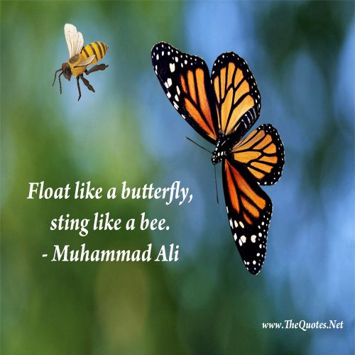 Can Bee Butterfly Your Eyes See Hit Your What Sting Can Hands Float T T