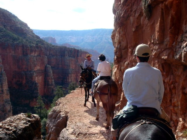 Canyon Grand Abyss Mule Ride