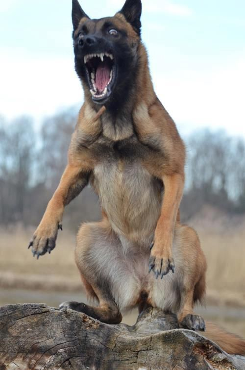 Funny Laugh War Dogs