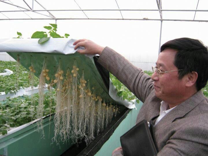 Can Led Lights Grow Plants