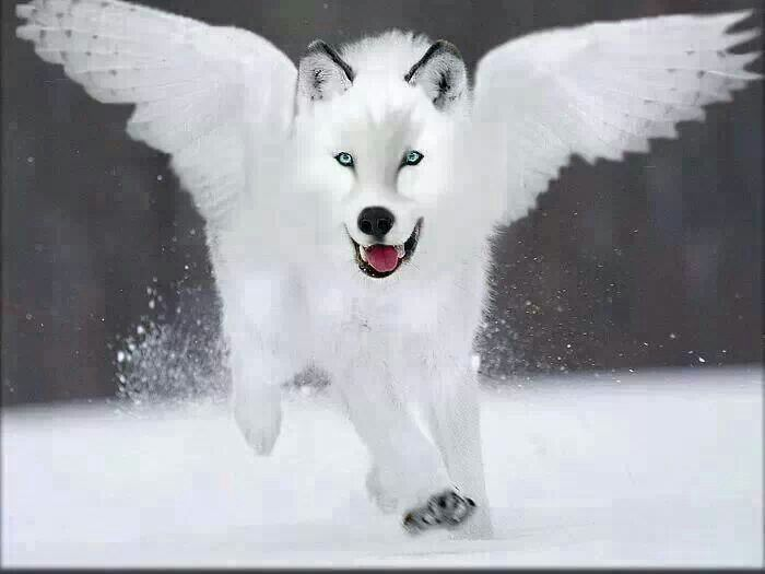 Wolves Wings
