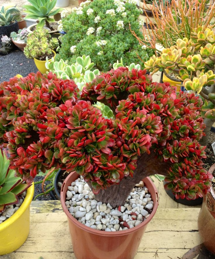 Unusual Succulent Plants
