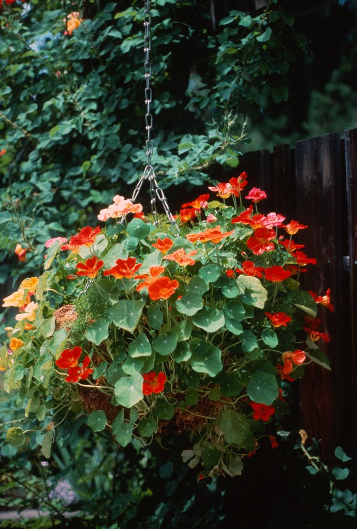Pretty Hanging Baskets