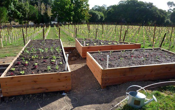 Starting Above Ground Garden