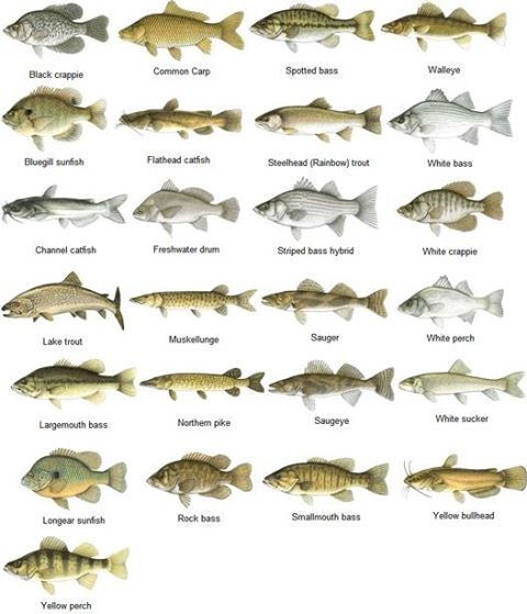 All Different Types Fish