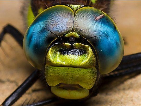 Fly Pendant Light